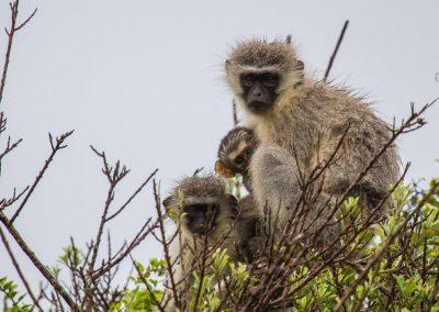 wet monkeys